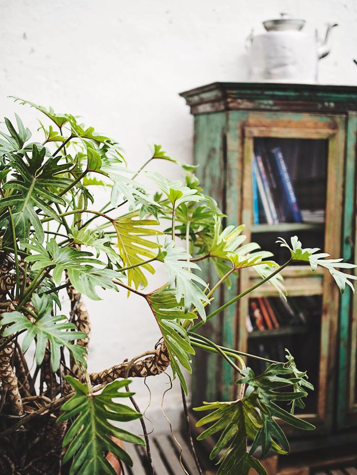 Gröna växter